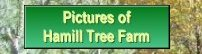 pictures of tree farm